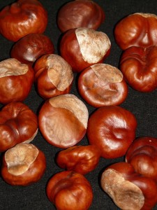 Horse chestnut seeds or conkers; image from pixabay.com