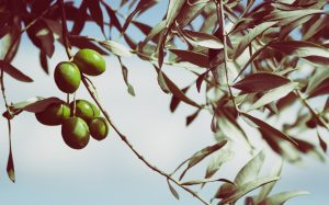 Olives; image from pixabay