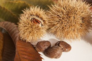 Sweet chestnut seeds or nuts
